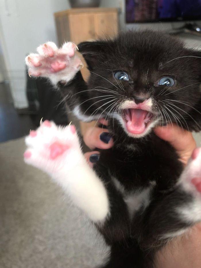 O grupo Murder Mittens é sobre gatos mostrando suas garras (35 fotos) 10