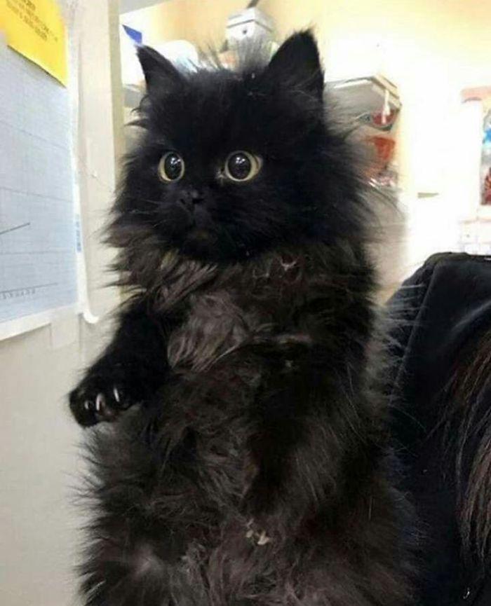 O grupo Murder Mittens é sobre gatos mostrando suas garras (35 fotos) 13