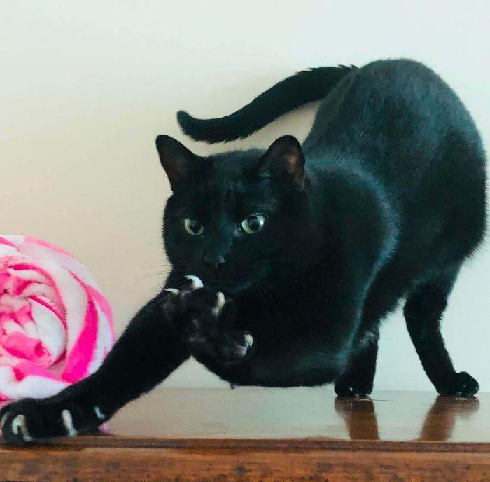O grupo Murder Mittens é sobre gatos mostrando suas garras (35 fotos) 14
