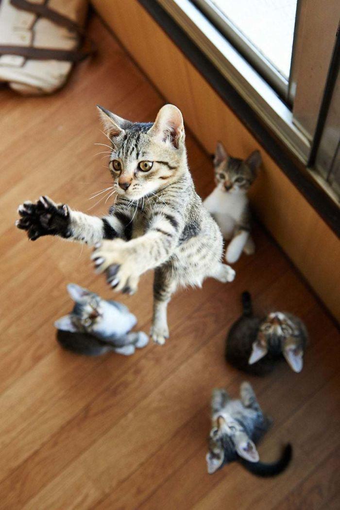 O grupo Murder Mittens é sobre gatos mostrando suas garras (35 fotos) 15