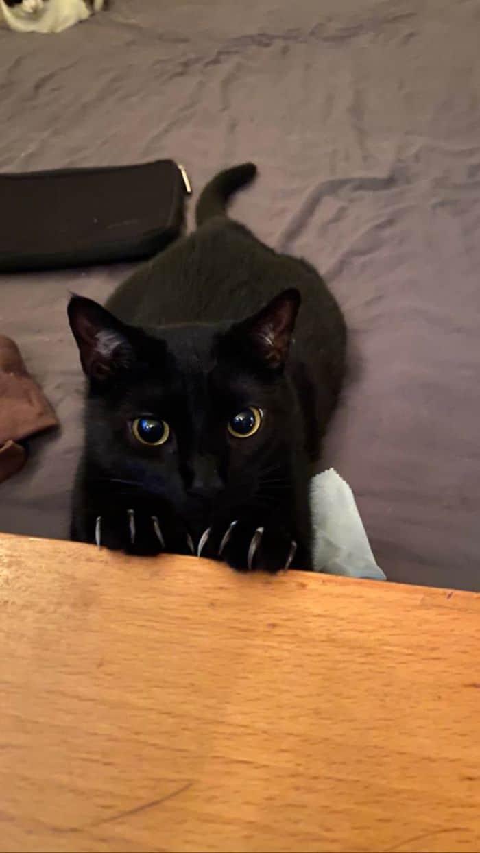 O grupo Murder Mittens é sobre gatos mostrando suas garras (35 fotos) 19