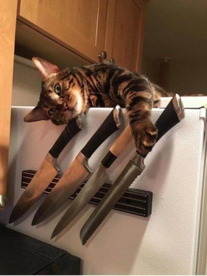 O grupo Murder Mittens é sobre gatos mostrando suas garras (35 fotos) 21