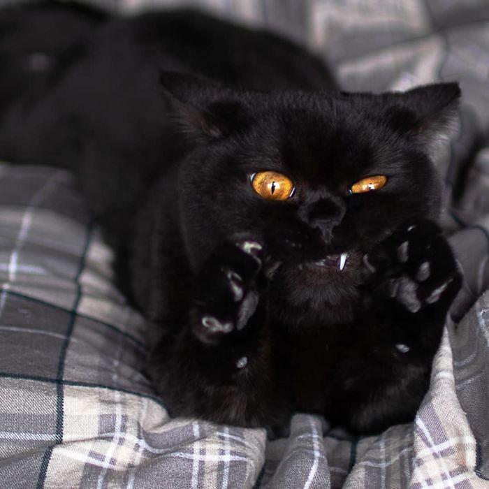 O grupo Murder Mittens é sobre gatos mostrando suas garras (35 fotos) 22