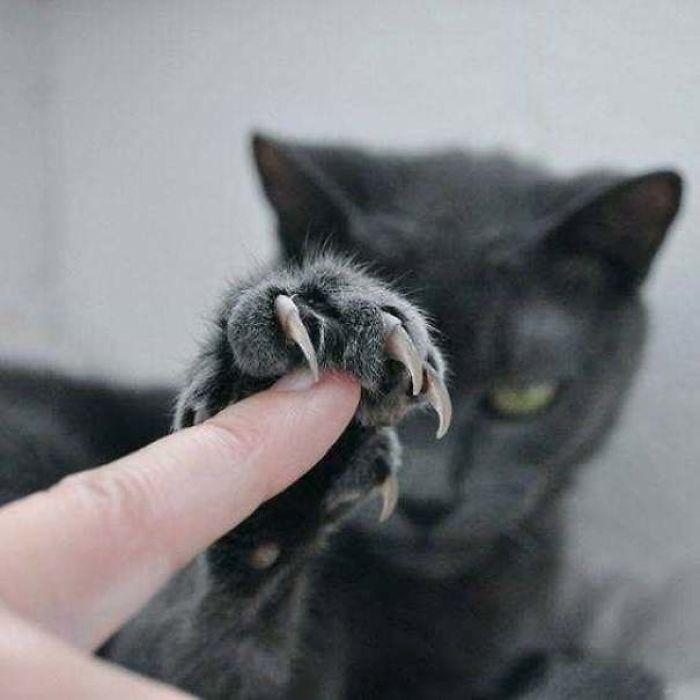 O grupo Murder Mittens é sobre gatos mostrando suas garras (35 fotos) 24