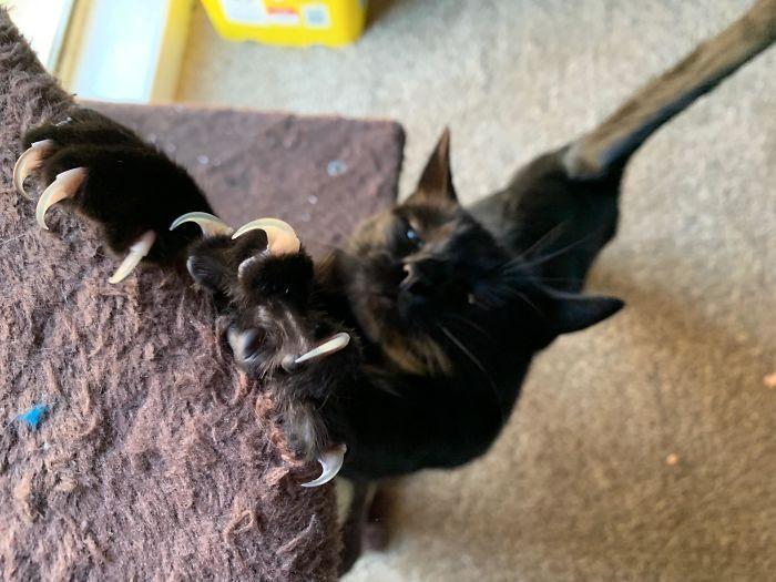O grupo Murder Mittens é sobre gatos mostrando suas garras (35 fotos) 25