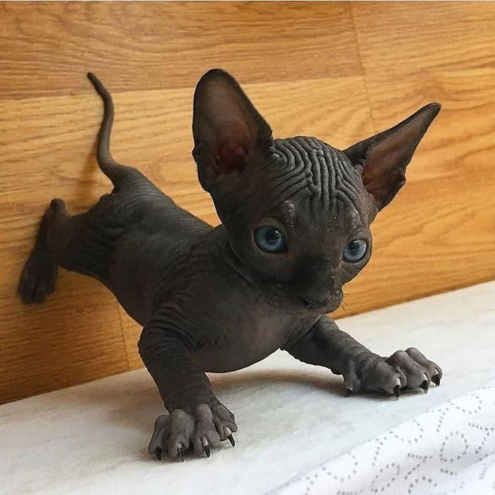 O grupo Murder Mittens é sobre gatos mostrando suas garras (35 fotos) 27