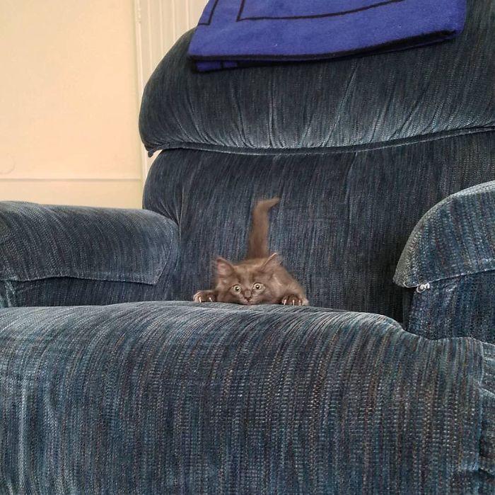 O grupo Murder Mittens é sobre gatos mostrando suas garras (35 fotos) 29