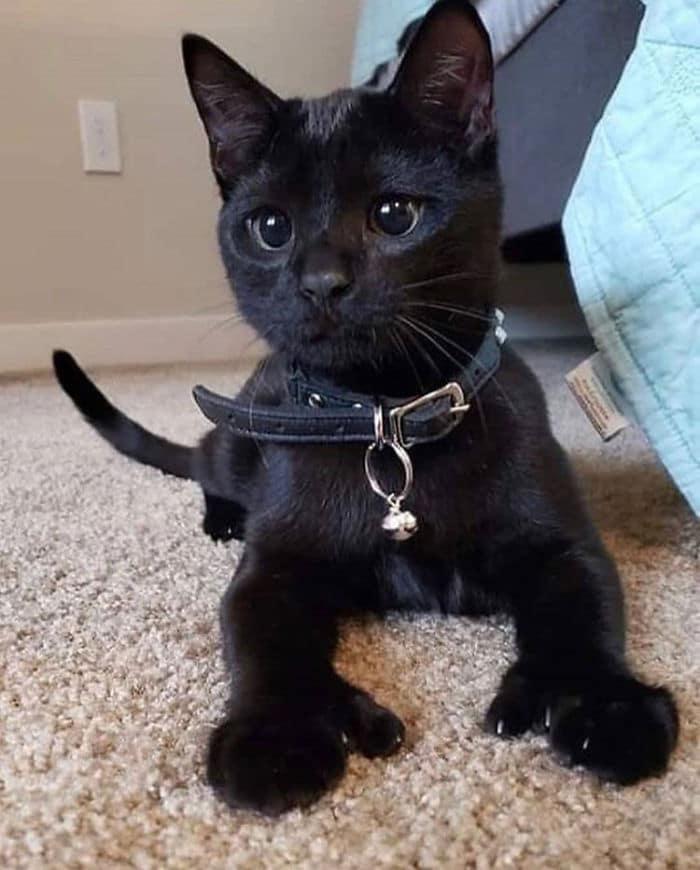 O grupo Murder Mittens é sobre gatos mostrando suas garras (35 fotos) 30
