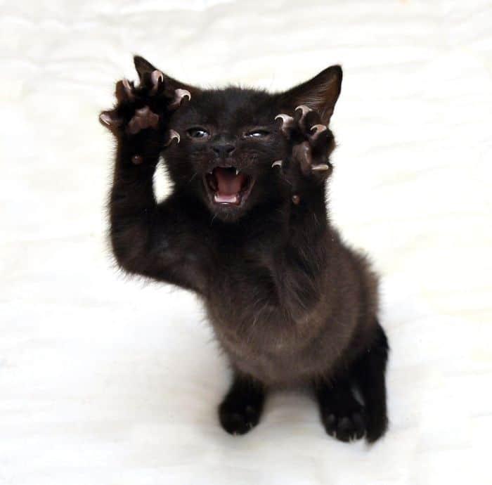 O grupo Murder Mittens é sobre gatos mostrando suas garras (35 fotos) 31