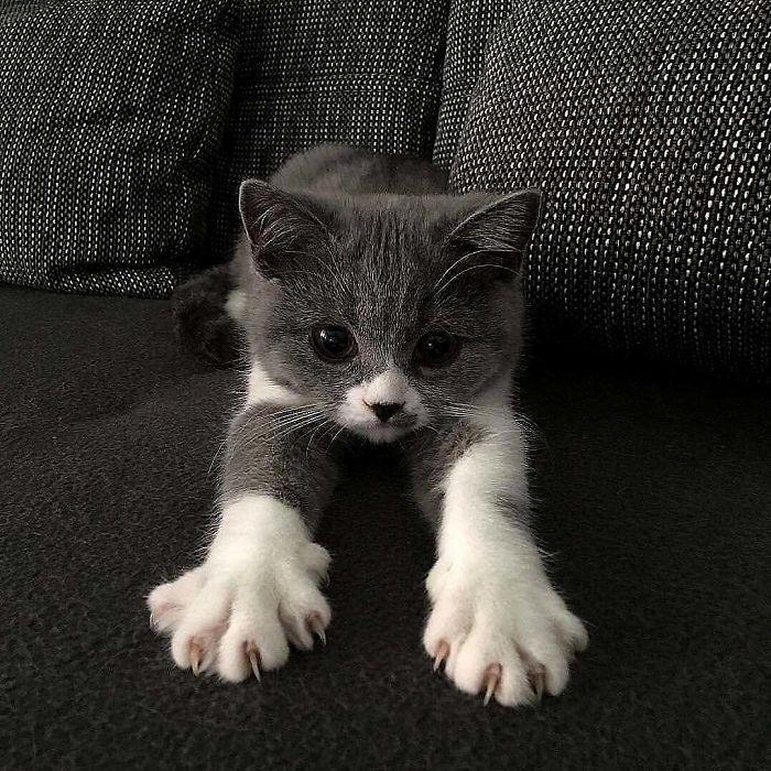 O grupo Murder Mittens é sobre gatos mostrando suas garras (35 fotos) 34
