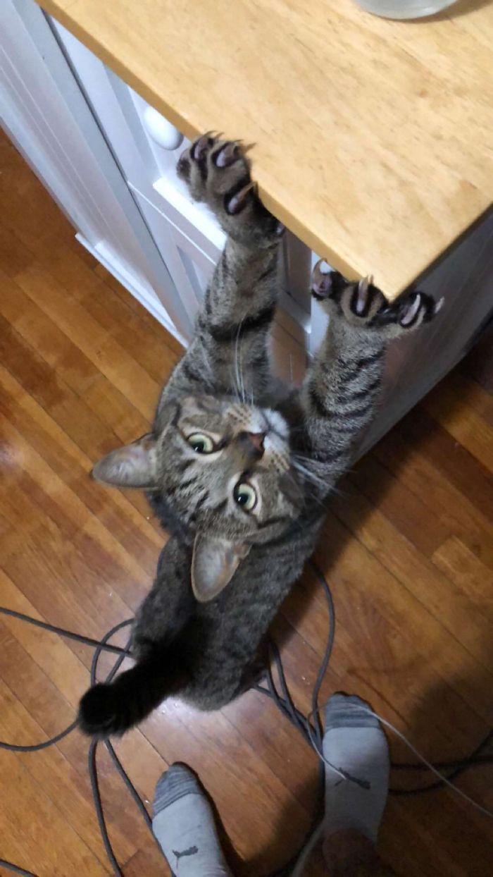 O grupo Murder Mittens é sobre gatos mostrando suas garras (35 fotos) 35