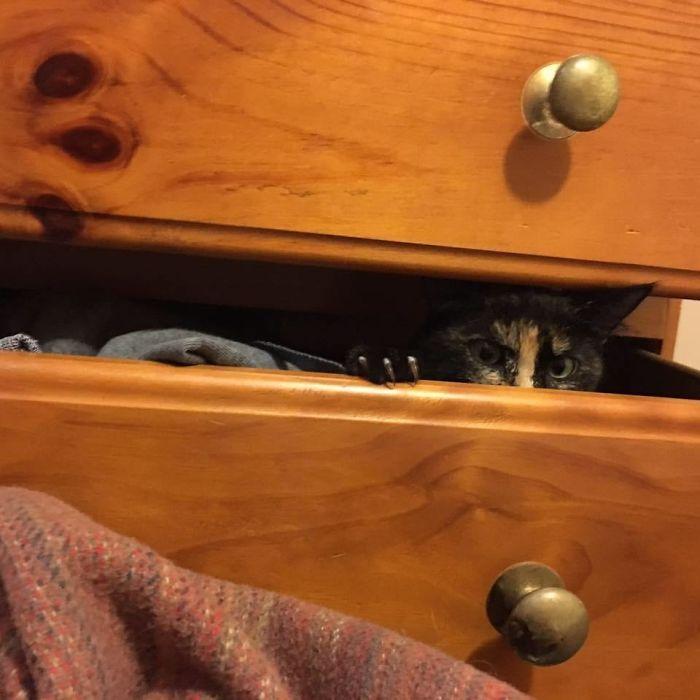 O grupo Murder Mittens é sobre gatos mostrando suas garras (35 fotos) 36