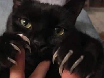 O grupo Murder Mittens é sobre gatos mostrando suas garras (35 fotos) 18