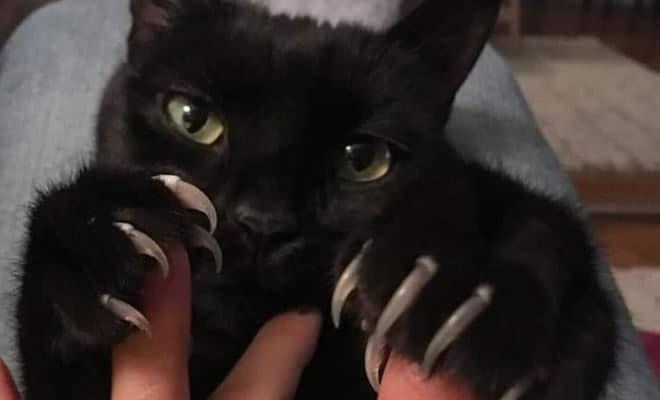 O grupo Murder Mittens é sobre gatos mostrando suas garras (35 fotos) 32
