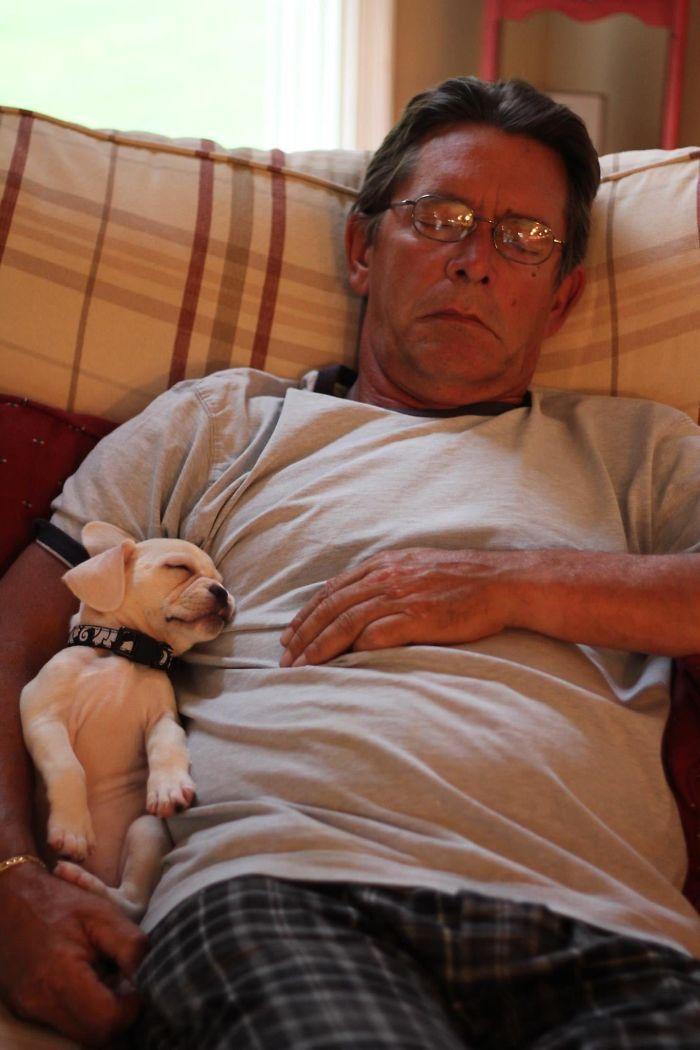 25 pais que não queriam animais de estimação em suas vidas 10