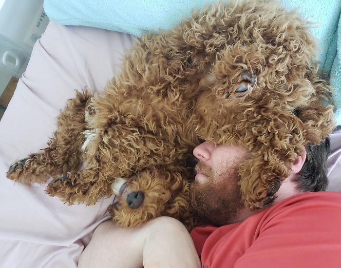 25 pais que não queriam animais de estimação em suas vidas 11