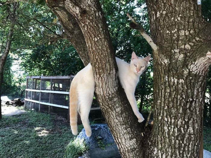 36 vezes as pessoas levantaram a pergunta O que há de errado com meu gato? 4