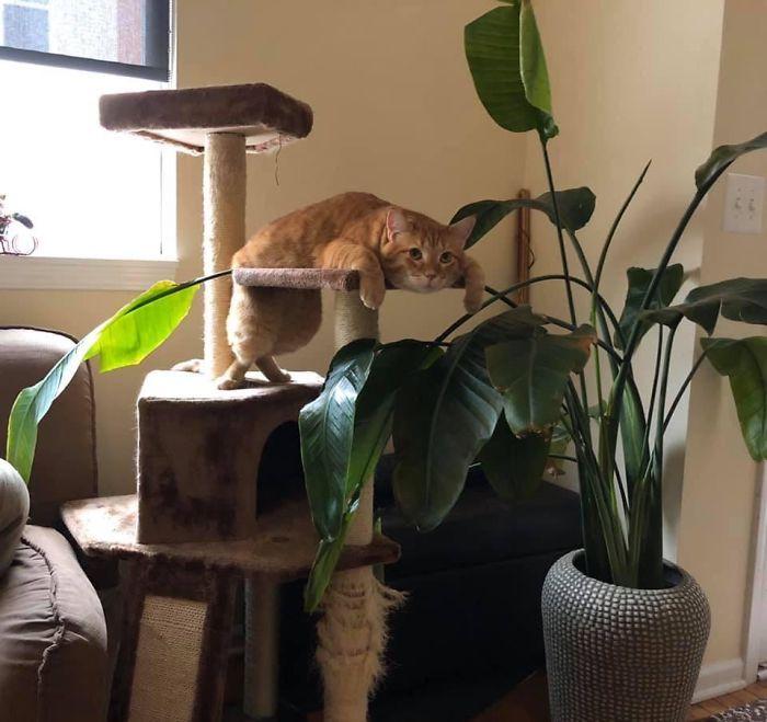 36 vezes as pessoas levantaram a pergunta O que há de errado com meu gato? 6