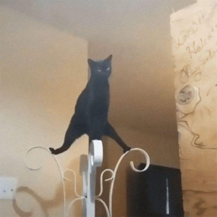 36 vezes as pessoas levantaram a pergunta O que há de errado com meu gato? 37