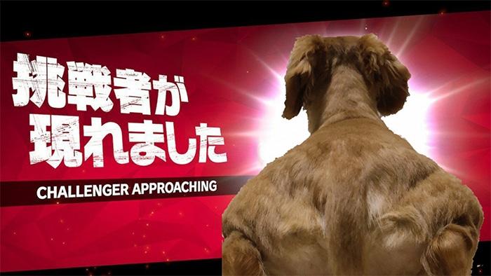Alguém compartilhou uma foto de cachorro, e os mestres do Photoshop atacou de uma maneira hilária (16 fotos) 5