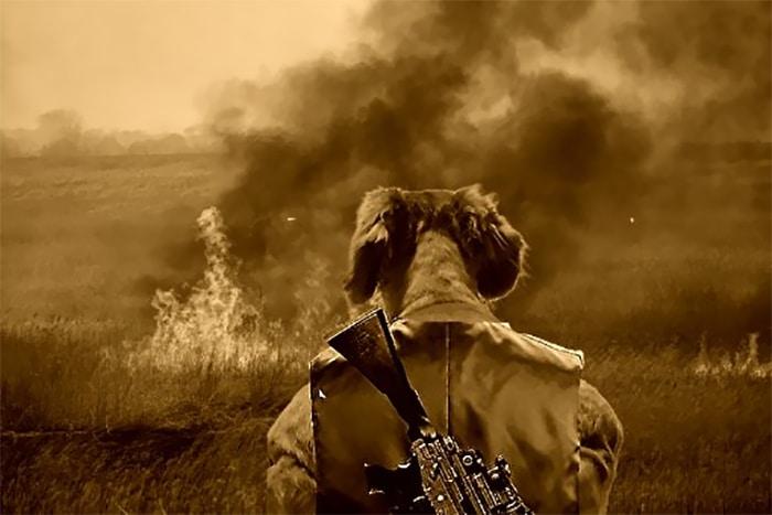 Alguém compartilhou uma foto de cachorro, e os mestres do Photoshop atacou de uma maneira hilária (16 fotos) 8