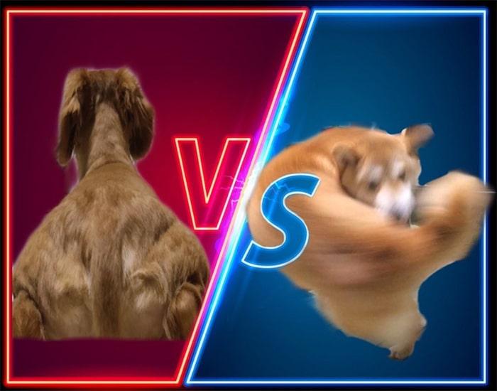 Alguém compartilhou uma foto de cachorro, e os mestres do Photoshop atacou de uma maneira hilária (16 fotos) 9