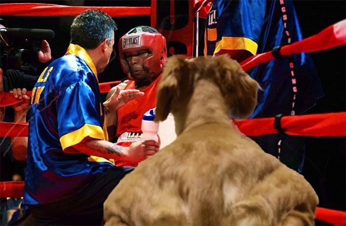 Alguém compartilhou uma foto de cachorro, e os mestres do Photoshop atacou de uma maneira hilária (16 fotos) 11