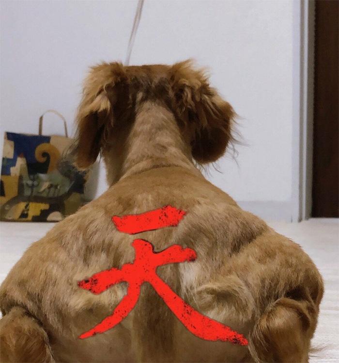 Alguém compartilhou uma foto de cachorro, e os mestres do Photoshop atacou de uma maneira hilária (16 fotos) 15