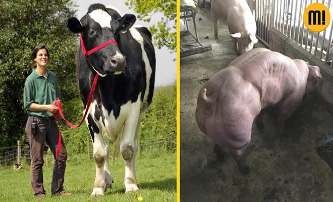 5 animais modificados que você nunca imaginou ver 2