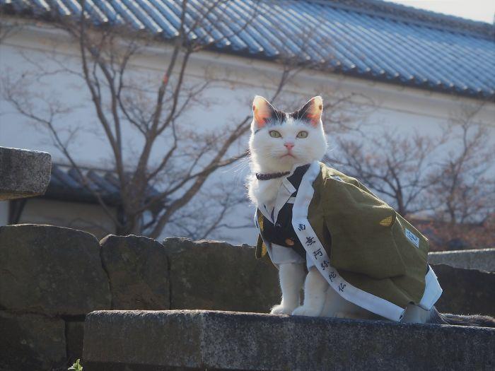 Em seu tempo livre, esse cara faz fantasias de anime para seus gatos 2