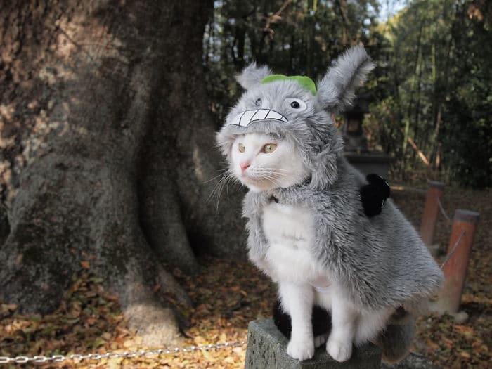 Em seu tempo livre, esse cara faz fantasias de anime para seus gatos 3