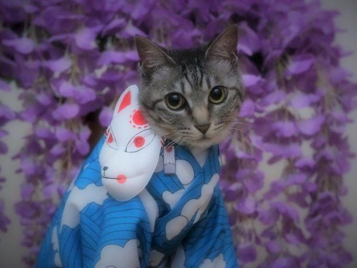 Em seu tempo livre, esse cara faz fantasias de anime para seus gatos 5