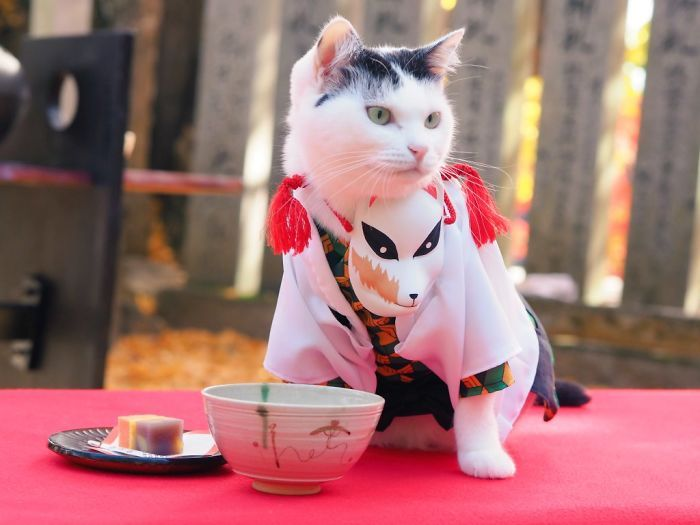 Em seu tempo livre, esse cara faz fantasias de anime para seus gatos 8