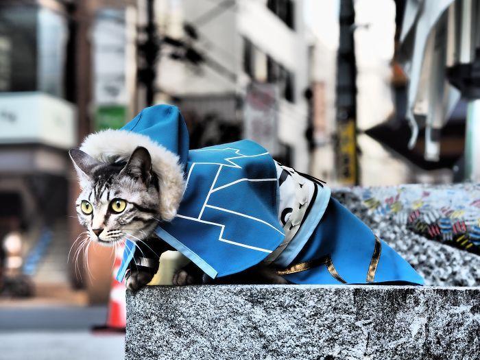 Em seu tempo livre, esse cara faz fantasias de anime para seus gatos 9