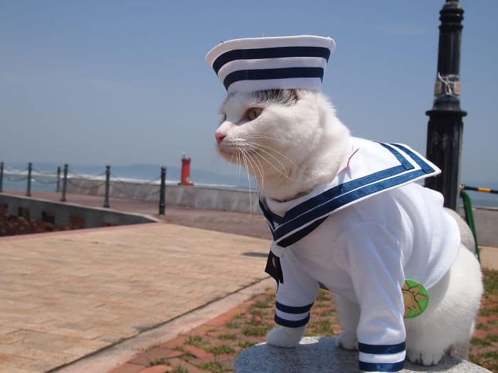 Em seu tempo livre, esse cara faz fantasias de anime para seus gatos 10