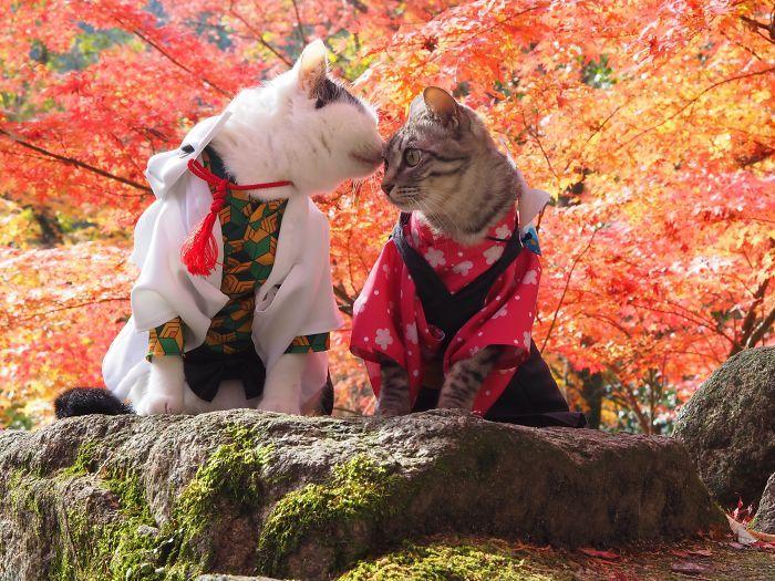 Em seu tempo livre, esse cara faz fantasias de anime para seus gatos 11