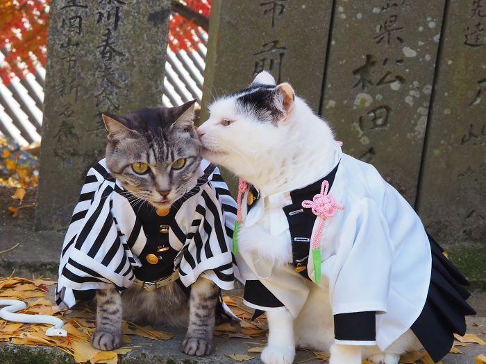 Em seu tempo livre, esse cara faz fantasias de anime para seus gatos 12