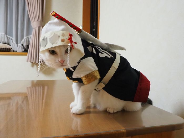 Em seu tempo livre, esse cara faz fantasias de anime para seus gatos 13