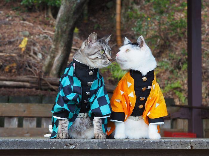 Em seu tempo livre, esse cara faz fantasias de anime para seus gatos 15