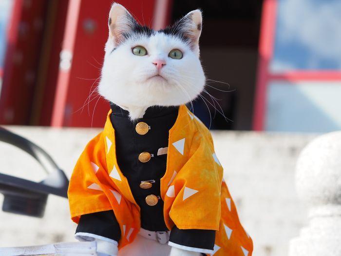 Em seu tempo livre, esse cara faz fantasias de anime para seus gatos 16