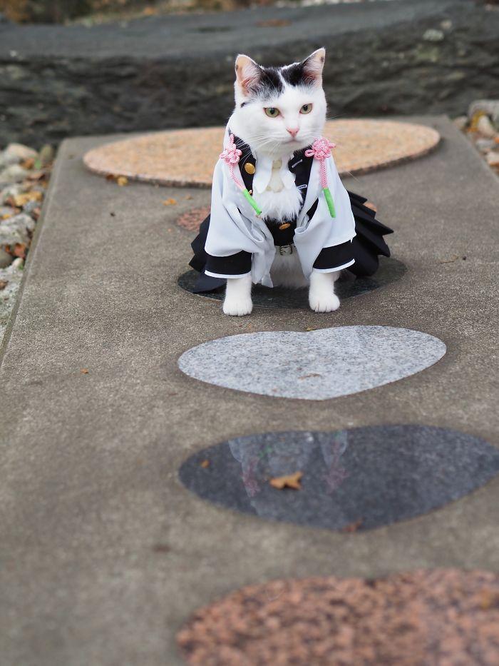 Em seu tempo livre, esse cara faz fantasias de anime para seus gatos 19