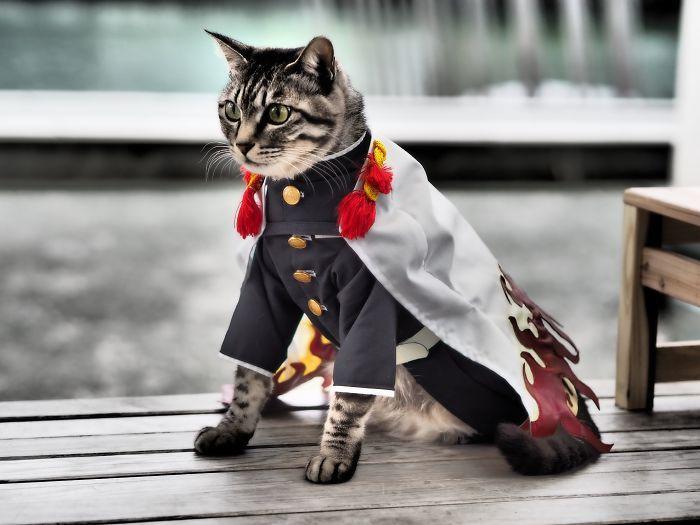 Em seu tempo livre, esse cara faz fantasias de anime para seus gatos 20