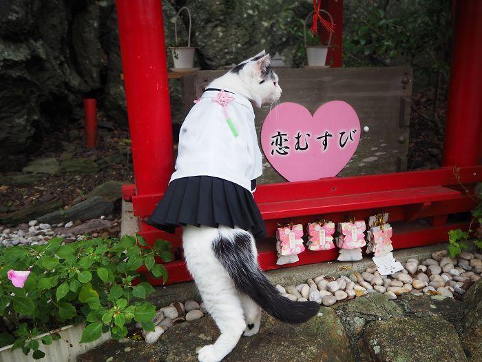 Em seu tempo livre, esse cara faz fantasias de anime para seus gatos 21