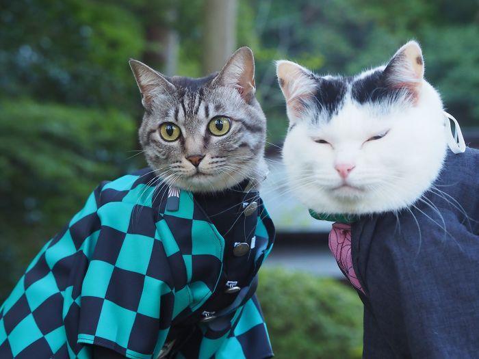 Em seu tempo livre, esse cara faz fantasias de anime para seus gatos 25