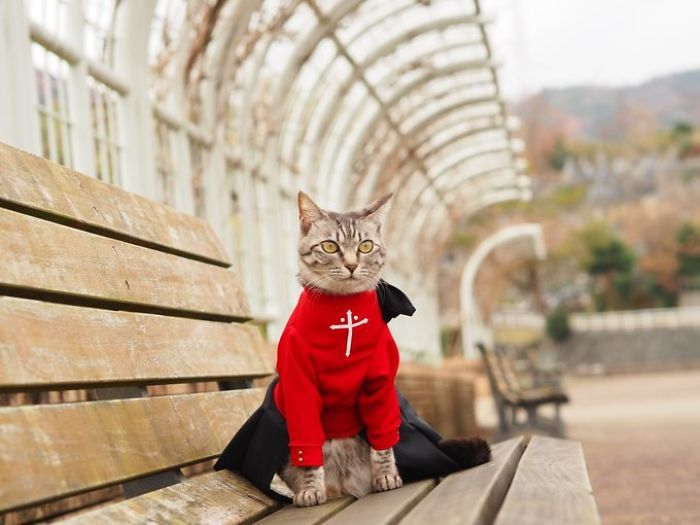 Em seu tempo livre, esse cara faz fantasias de anime para seus gatos 26