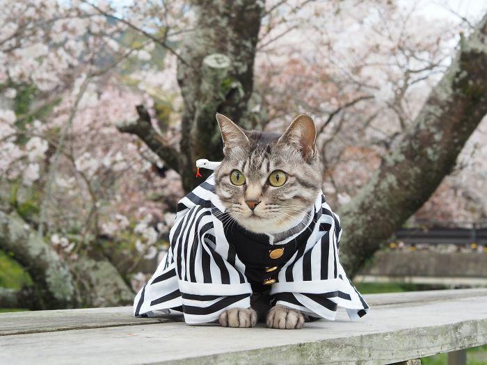 Em seu tempo livre, esse cara faz fantasias de anime para seus gatos 28