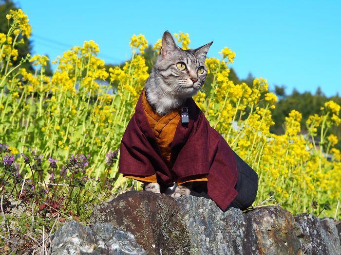 Em seu tempo livre, esse cara faz fantasias de anime para seus gatos 29