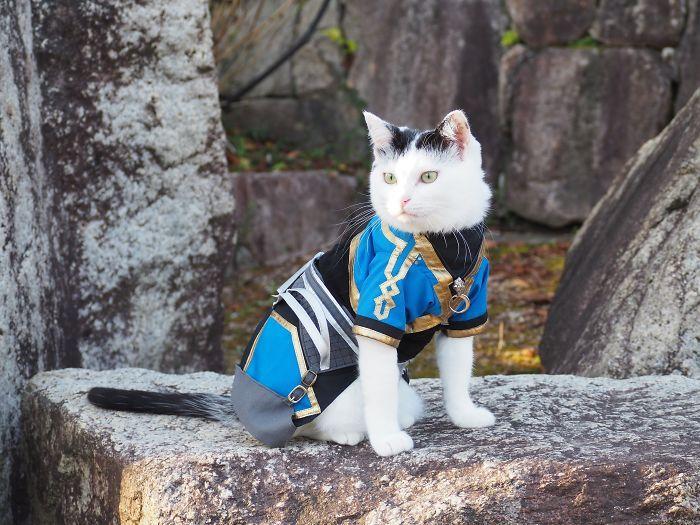 Em seu tempo livre, esse cara faz fantasias de anime para seus gatos 30