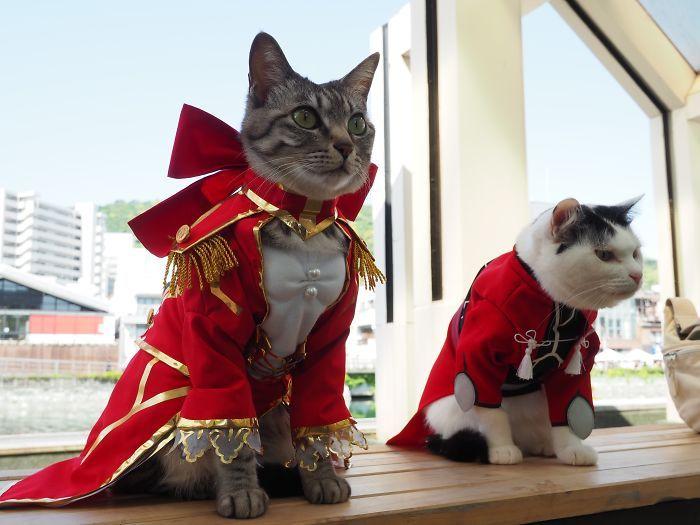 Em seu tempo livre, esse cara faz fantasias de anime para seus gatos 31