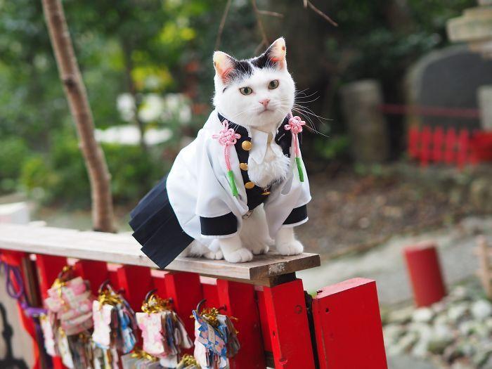 Em seu tempo livre, esse cara faz fantasias de anime para seus gatos 33